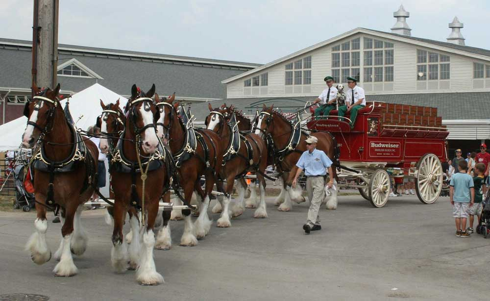 Budweiser Wagon and Horses